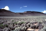 Great Basin Desertscrub